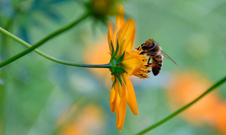 Les objets connectés et la modélisation au service des abeilles