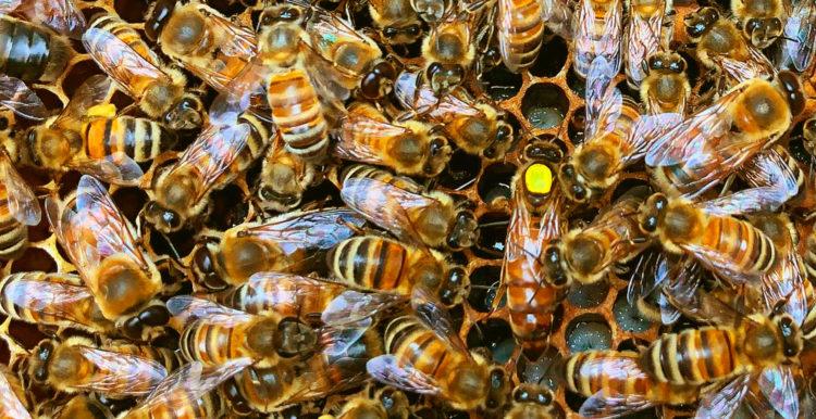 Nettoyage du rucher école